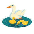 Duck swimming with two ducklings illustration