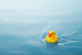 Duck yellow rubber swimming on water causing waves and ripples Stock Images