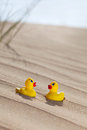 Duckies in the desert fun picture of two being obviously lost communicating making it work together Stock Photography