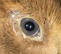 Duckling eye. close Royalty Free Stock Photo