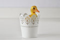 Duckling in a tin live peeking out of cup Stock Images