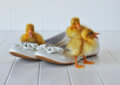 Ducklings And Easter Shoes