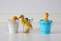 Ducklings in pails three cute live and near little easter and tins Royalty Free Stock Photos