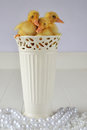 Ducklings in a vase three sitting on top of surrounded by pearls Royalty Free Stock Photo