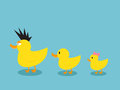 Ducks a família Fotos de Stock Royalty Free