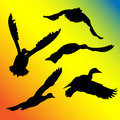 Ducks flying silhouette five duck silhouettes with wings in different positions Stock Photography