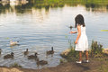 Ducks gather at the pond to get food from a little girl Royalty Free Stock Photo