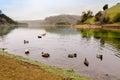 Ducks at lake chabot in hayward california Royalty Free Stock Photography
