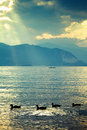 Ducks on the lake four a after storm cleared and sun shines through clouds in a golden light Royalty Free Stock Photo