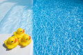 Ducks by pool Royalty Free Stock Photo