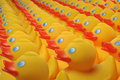 Ducks in rows Royalty Free Stock Photography