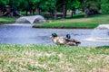 Ducks Scenary Royalty Free Stock Photo