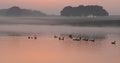 Ducks on sunset lake Royalty Free Stock Photo