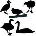Ducks and swans set of a black silhouettes Royalty Free Stock Image