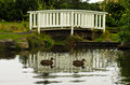 Ducks swimming in front of little white wooden bridge Royalty Free Stock Photo