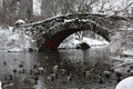 Ducks swimming in the lake in Central Park during the snow storm Niko Manhattan, New York City Royalty Free Stock Photo