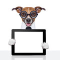 Dumb business dog Royalty Free Stock Photography
