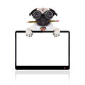 Dumb crazy dog pug with nerd glasses as an office business worker with pencil in mouth behind laptop pc tablet computer screen Stock Photo
