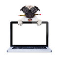 Dumb crazy dog pug with nerd glasses as an office business worker with pencil in mouth behind laptop pc tablet computer screen Stock Photography