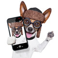 Dumb crazy dog selfie silly with funny glasses showing tongue taking Stock Photography
