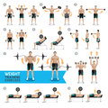 Dumbbell Exercises and Workouts Weight Training.
