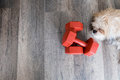 Dumbell and dog Royalty Free Stock Photo