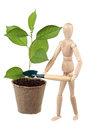 Dummy and cherry sapling Royalty Free Stock Photo