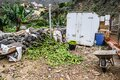 A dump of rotten green bananas on an organic farm. Canary Islands, Tenerife