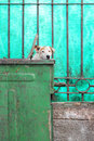 Dumpster dog stray peaks head out of Stock Images