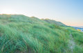 Dune with beach grass Royalty Free Stock Photo