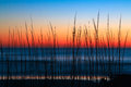 Dune grass dawn is silhouetted by a colorful predawn sky over the atlantic ocean at washington oaks state park florida Stock Image