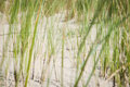 Dune grass on sandy shore a with at the coast of holland Royalty Free Stock Photography