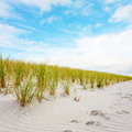 Dune with marram grass and traces in the sand Stock Photos