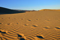 Dune maspalomas famous natural park dunes in gran canaria at evening time canary island spain Royalty Free Stock Photos