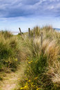Dunes and grass Royalty Free Stock Photo