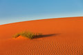 Dunes of sahara desert bush in desert Royalty Free Stock Images