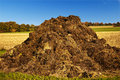 Dung heap Royalty Free Stock Photo