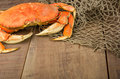 Dungeness crab ready to cook Royalty Free Stock Photography