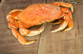 Dungeness crab ready to cook Royalty Free Stock Photos
