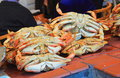 Dungeness crab whole on seafood market in san francisco fisherman s wharf Royalty Free Stock Image