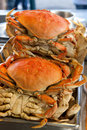 Dungeness crabs Stock Photos