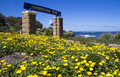 Dunningham park coogee sydney and yellow flowers at beach eastern beaches new south wales australia Stock Photo