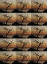 DUPLICATION OF TREE AGAINST SUNSET IN AFRICA Royalty Free Stock Photo