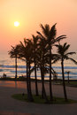 Durban palms a group of palm trees on beach front south africa Royalty Free Stock Photo