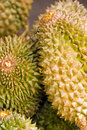Durian fruits Stock Image