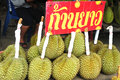 Durian fruits in thailand fresh Royalty Free Stock Photo