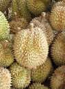 Durian king of fruit famous in thailand Royalty Free Stock Photo