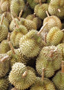 Durian king of fruit famous in thailand Stock Photos