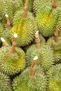Durian king of fruit at a market stall Royalty Free Stock Photo