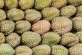 Durian. Royalty Free Stock Photo